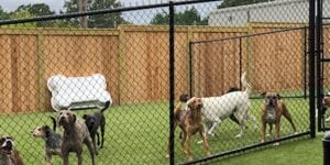 vet clinic new fence